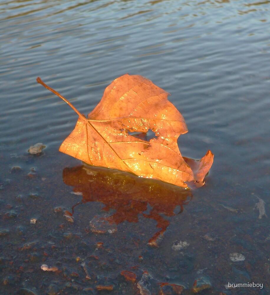 Reflective leaf (1) by brummieboy