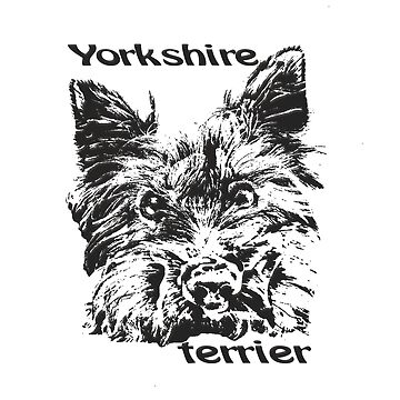 Yorkshire Terrier  Cute dog  lovely pet  by Hujer