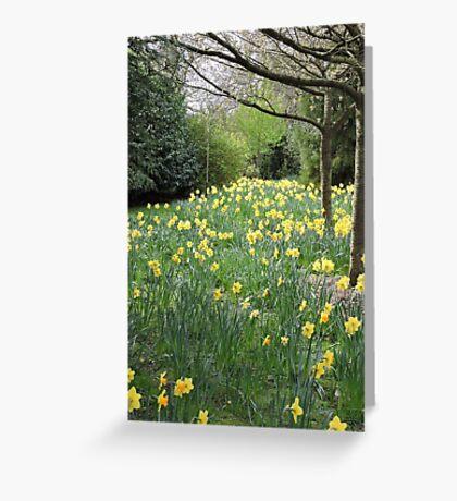 Daffodil Pathway Greeting Card