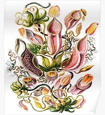 """""""Carnivorous Plant"""" Horticulture, Venus Flytrap Houseplant Poster"""