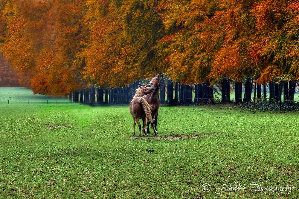 Colors of Autumn in Holland III  by John44