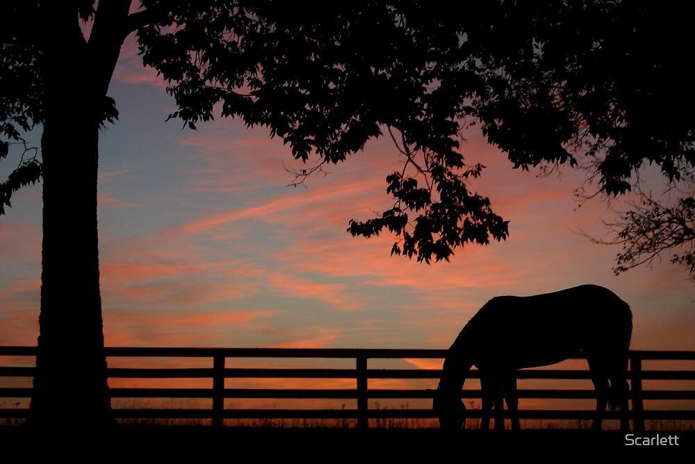 Kentucky Dawn by Scarlett
