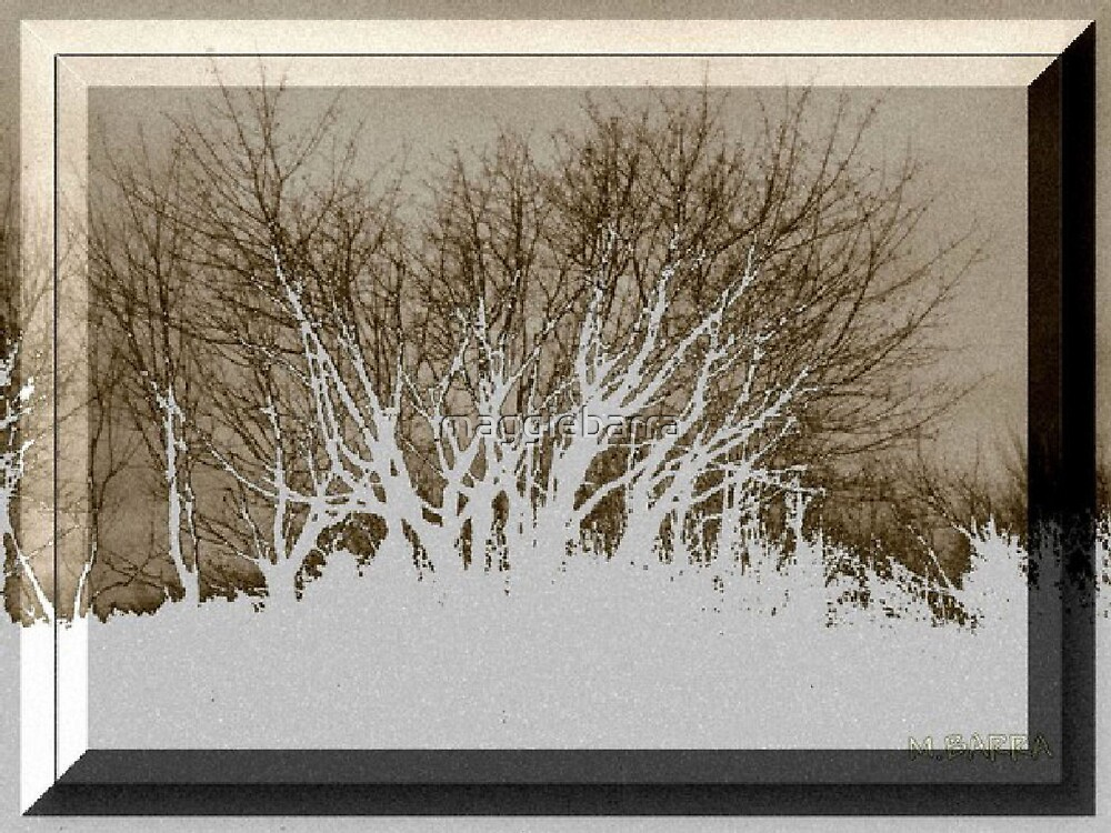 White Birches and Snow by maggiebarra