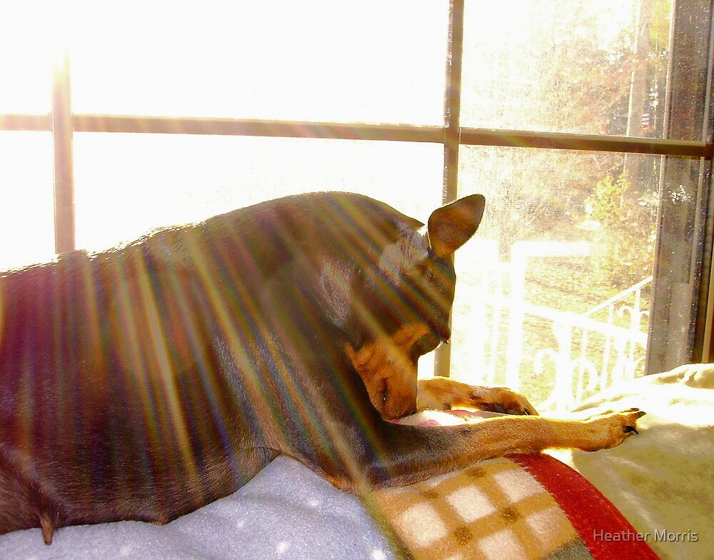Sun Worshiping by Heather Morris