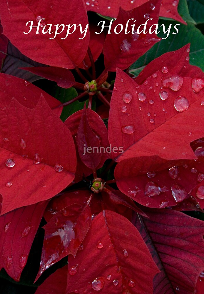 Red Poinsettia Water Drops - Happy Holidays by jenndes
