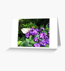 Butterfly on the Heliotrope Greeting Card
