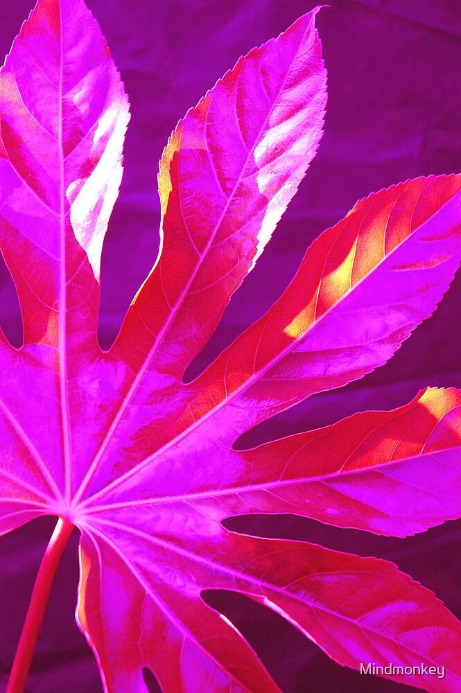 Leaf by Mindmonkey