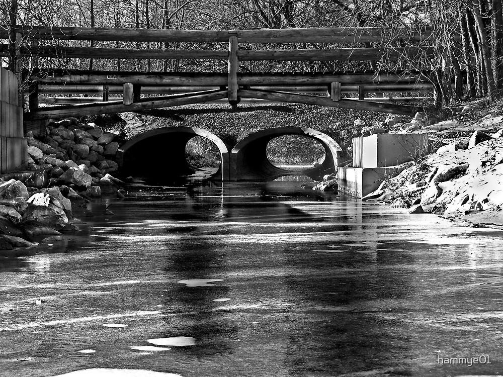 Cold and Frozen Stream in B&W by hammye01