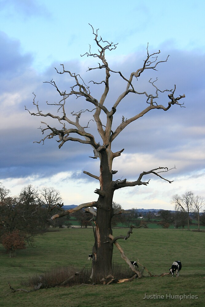 Bare Branches by Justine Humphries