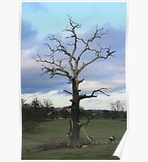Bare Branches Poster