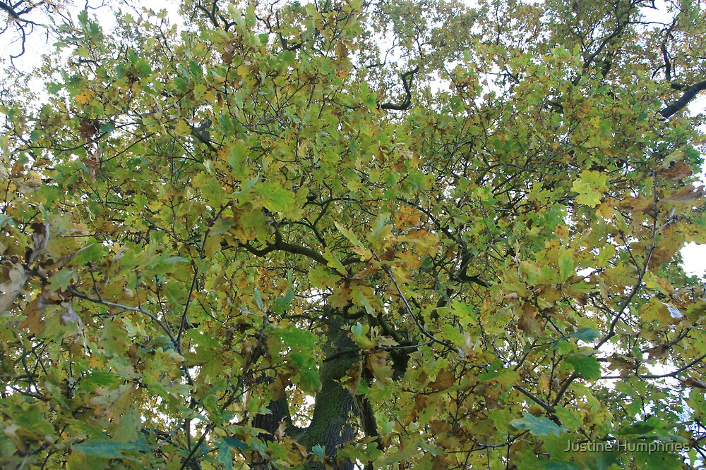 So many green leaves in December by Justine Humphries