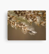 Macro nature Canvas Print