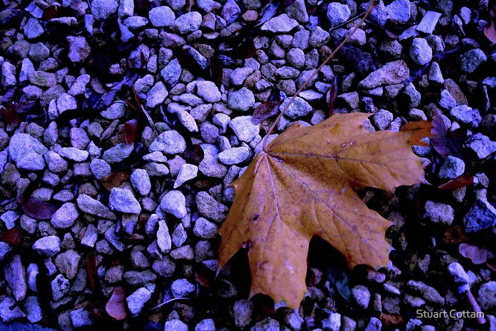 Autumn Blues by Stuart Cottam