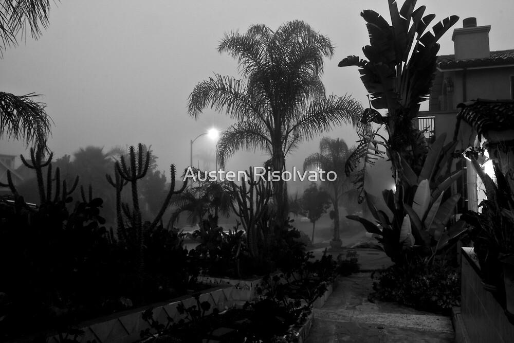 Haunted Fog by Austen Risolvato