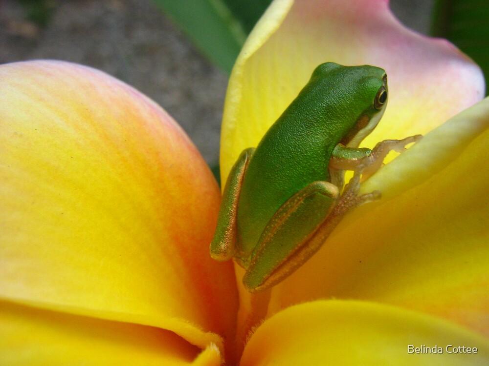 frog on frangie 2 by Belinda Cottee
