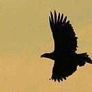 American Bald Eagle  by Paul Lenharr II
