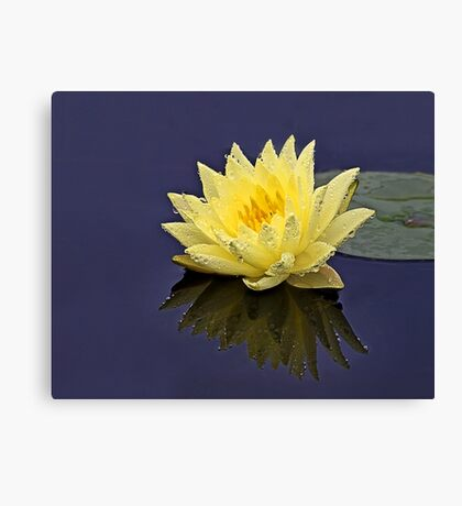 Lily In the Rain Canvas Print