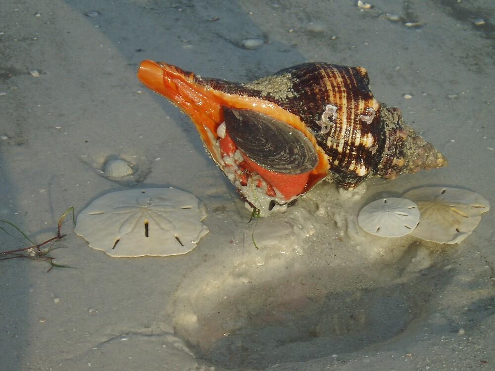 Whelk by Deborah Stewart
