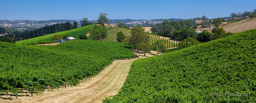 Summer Vines 3 by Paul Thompson