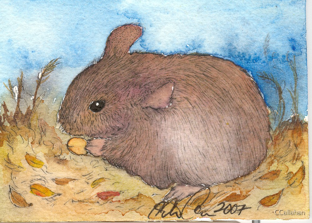 Mouse pen and ink Illustration by CCallahan