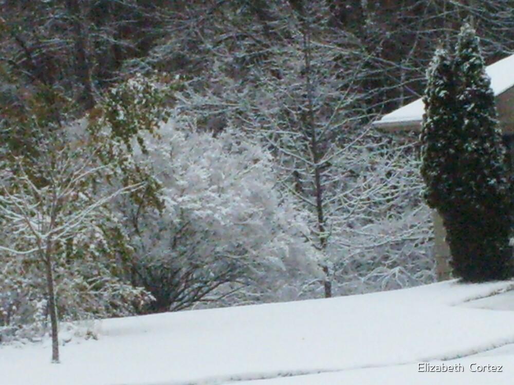 Fresh Fallen Snow by Elizabeth  Cortez