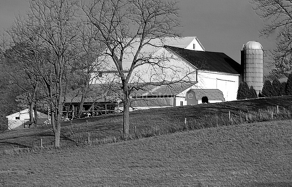 Amish Farm by Kathleen Struckle
