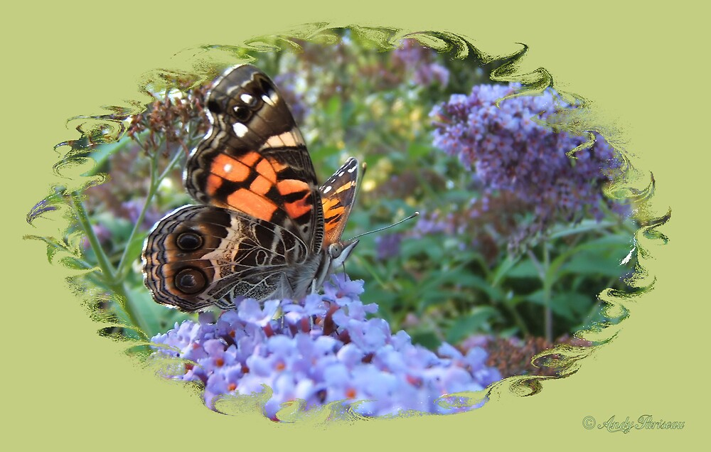 American Painted Lady 66 by Andy2302