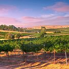 The Vines - Thorn Park, Clare Valley by Mark Richards