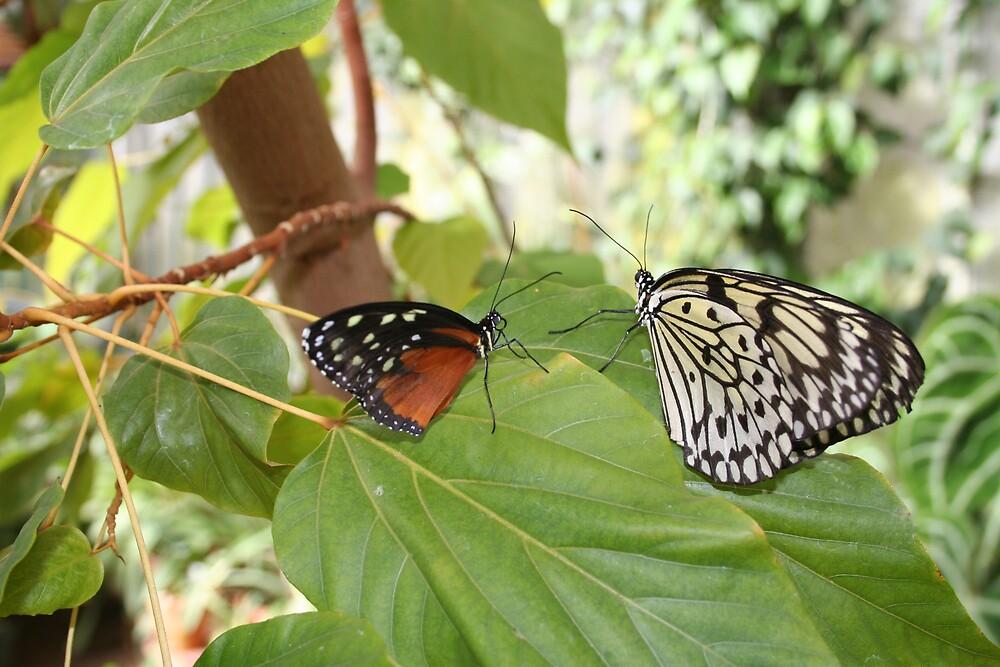 Butterfly talk by ilajom