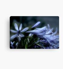 Moonlit Lavender Petals Canvas Print