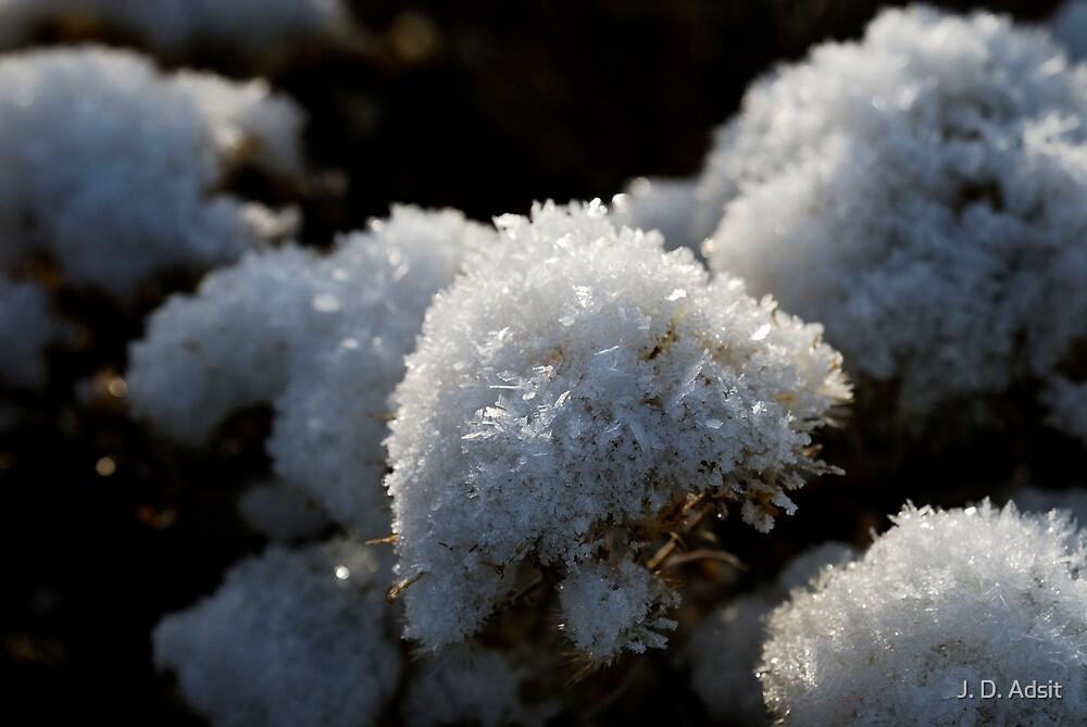 Frosty Bouquet by J. D. Adsit
