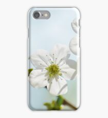 Spring flowers - Cherry blossoms iPhone Case/Skin