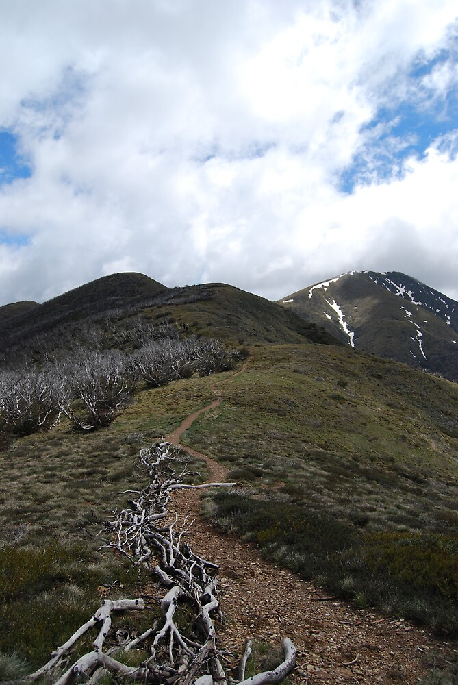 Mt Feathertop by Tyler Ratcliffe