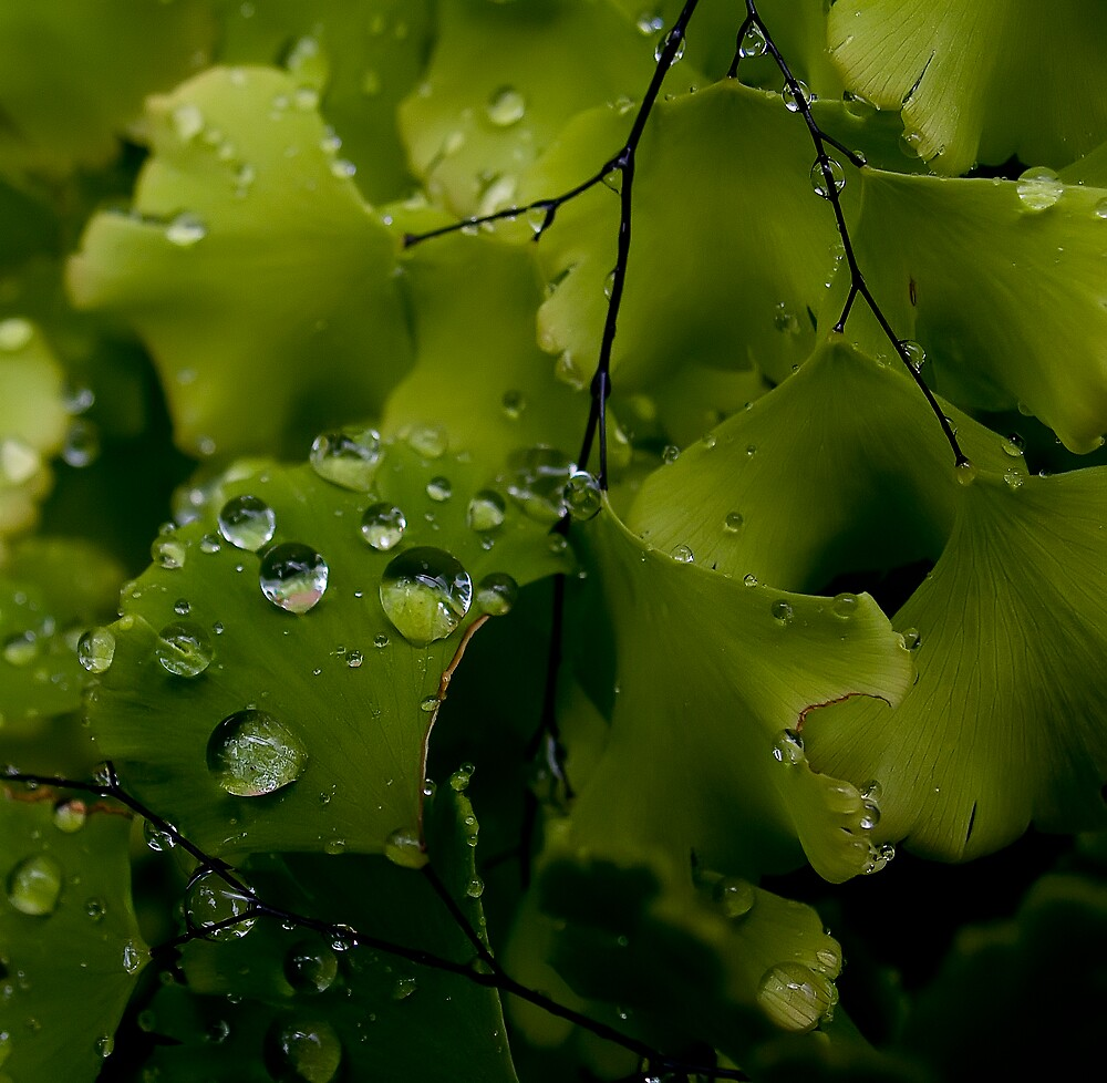 After the rain by David James