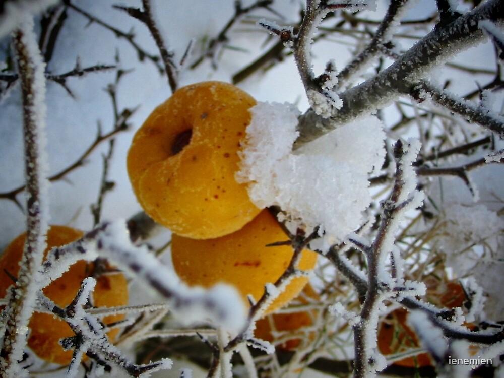 Fruits in Winter dress by ienemien