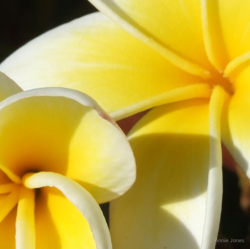 Bit of a flower by Annie Jones