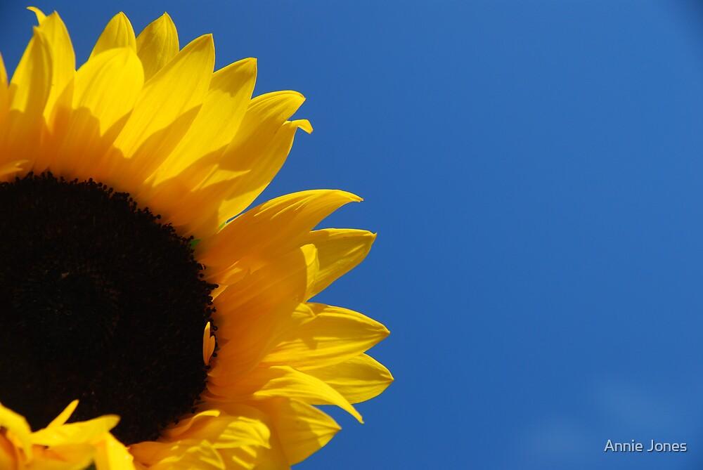 Sunny days by Annie Jones