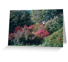 fiery bushes Greeting Card