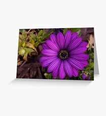 Untouched Beauty Greeting Card