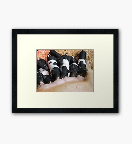 Piggy Feeding Time Framed Print