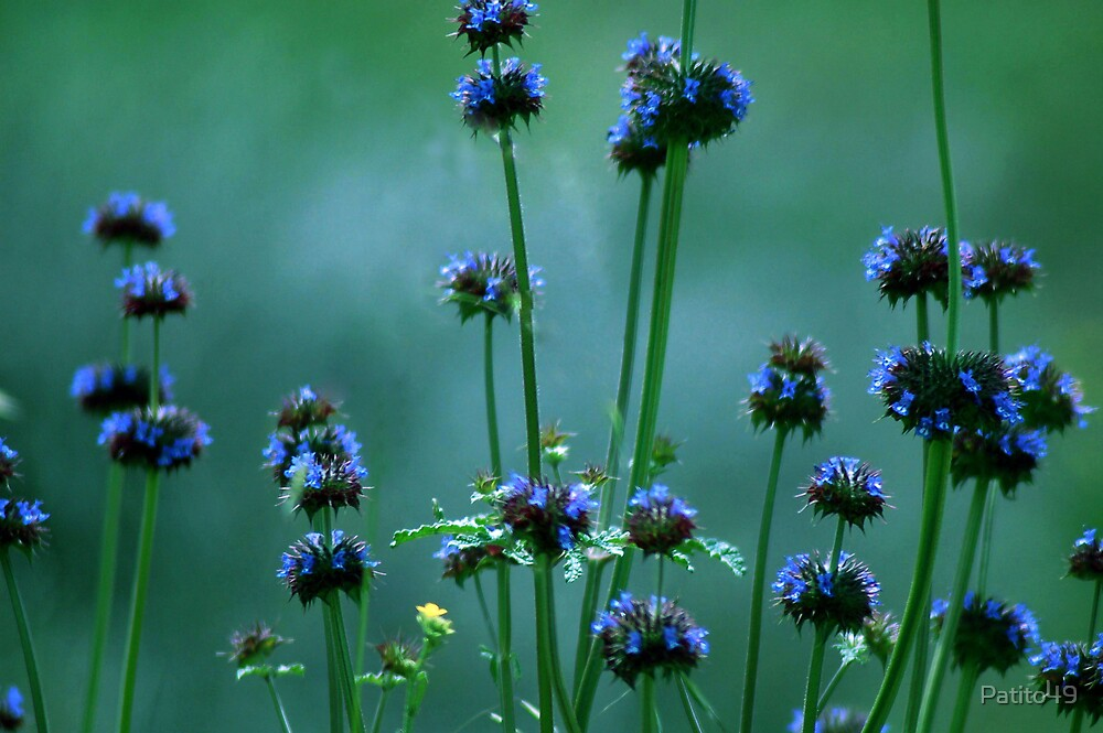 Blue Puffs by Patito49
