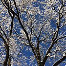 Winter Blue by Graham Geldard