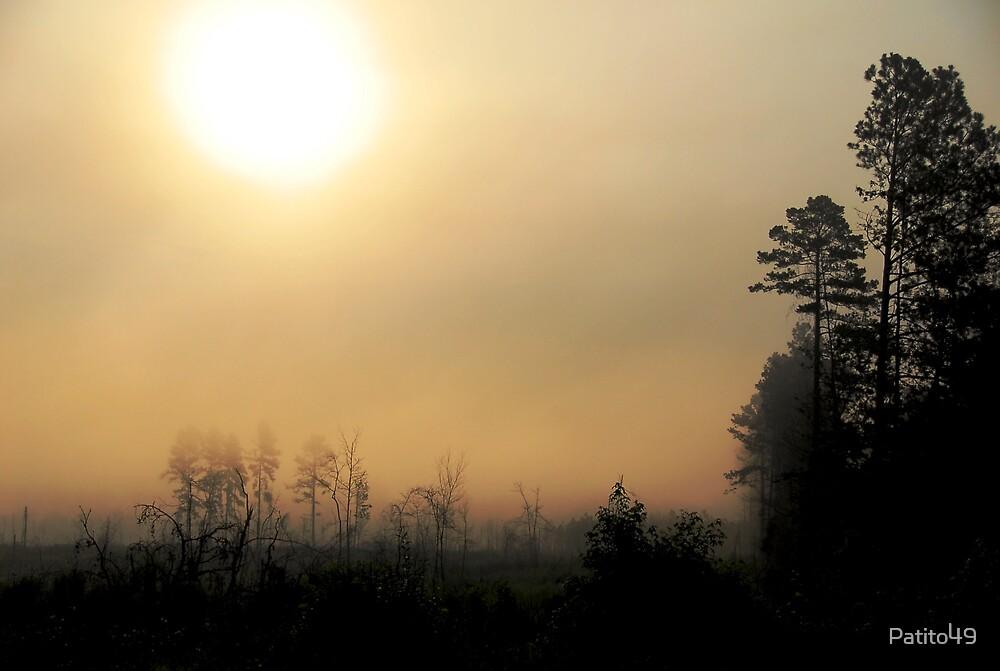 Foggy Tree Line by Patito49