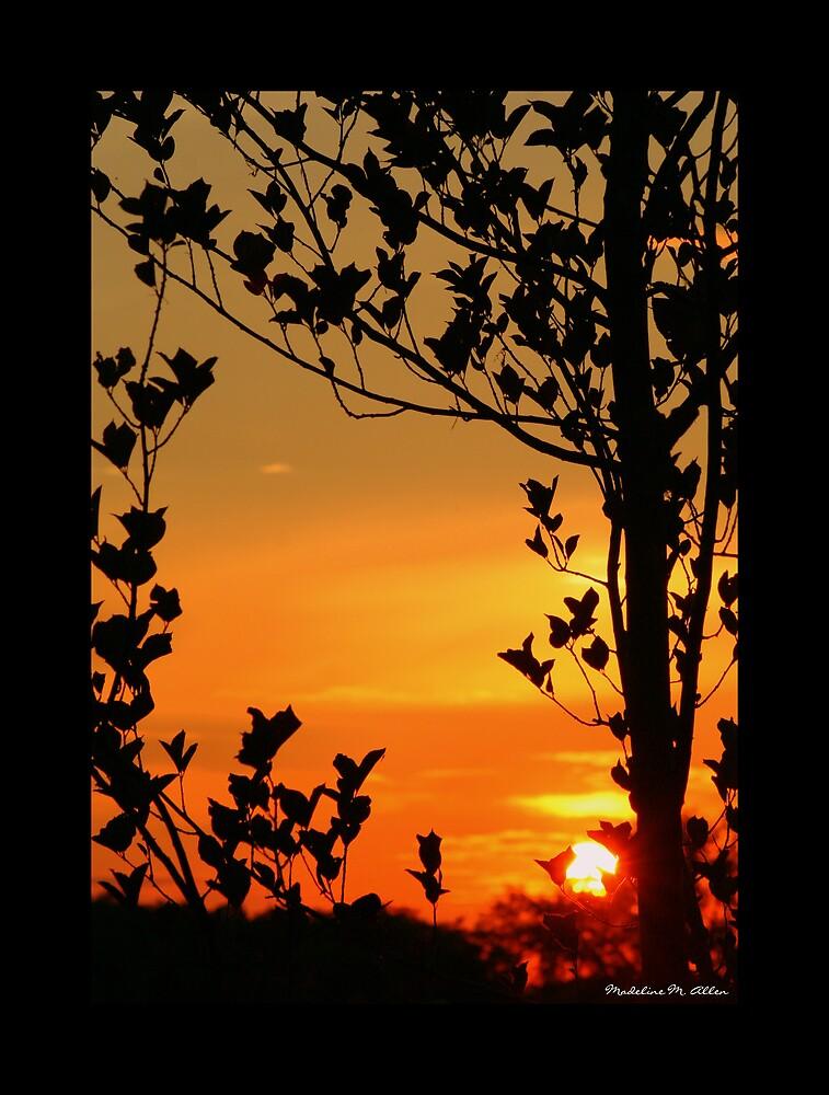 Summer Past by Madeline M  Allen