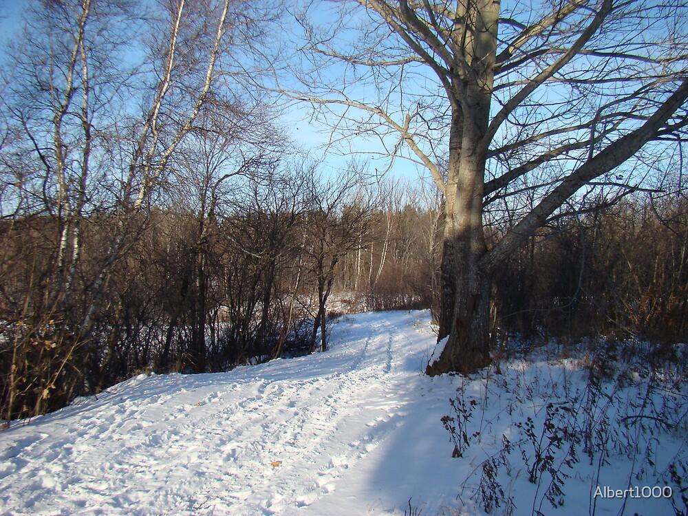 Winter scene by Albert1000
