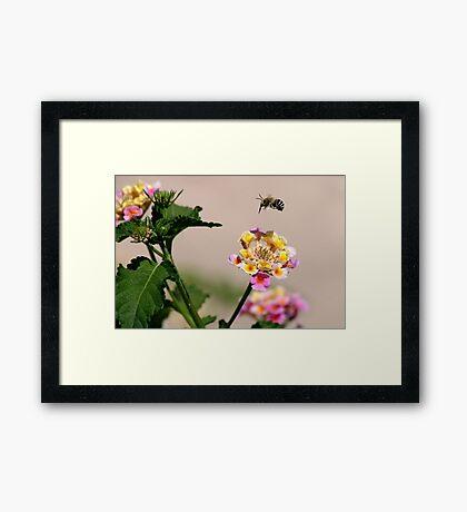 Hover Framed Print