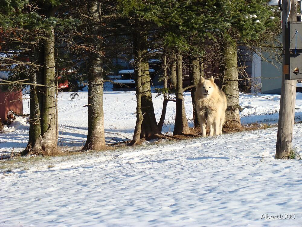 Dog in snow by Albert1000