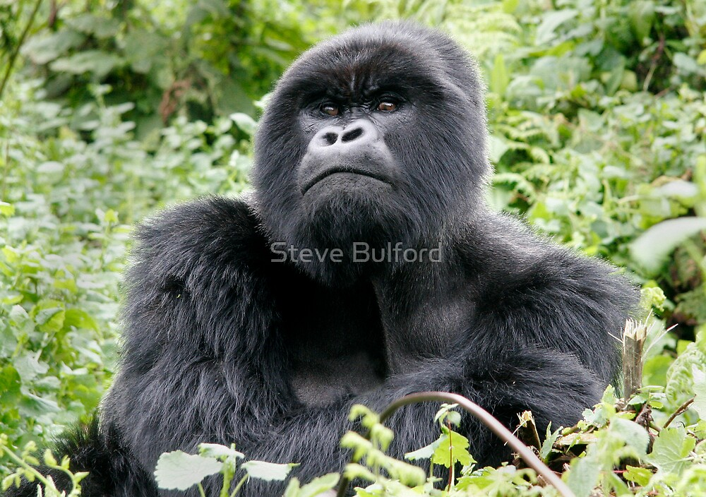 Dignified by Steve Bulford
