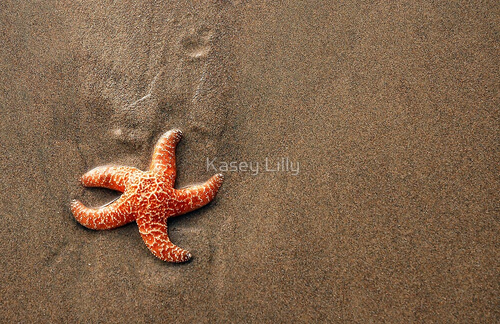 Star Fish by Kasey Lilly