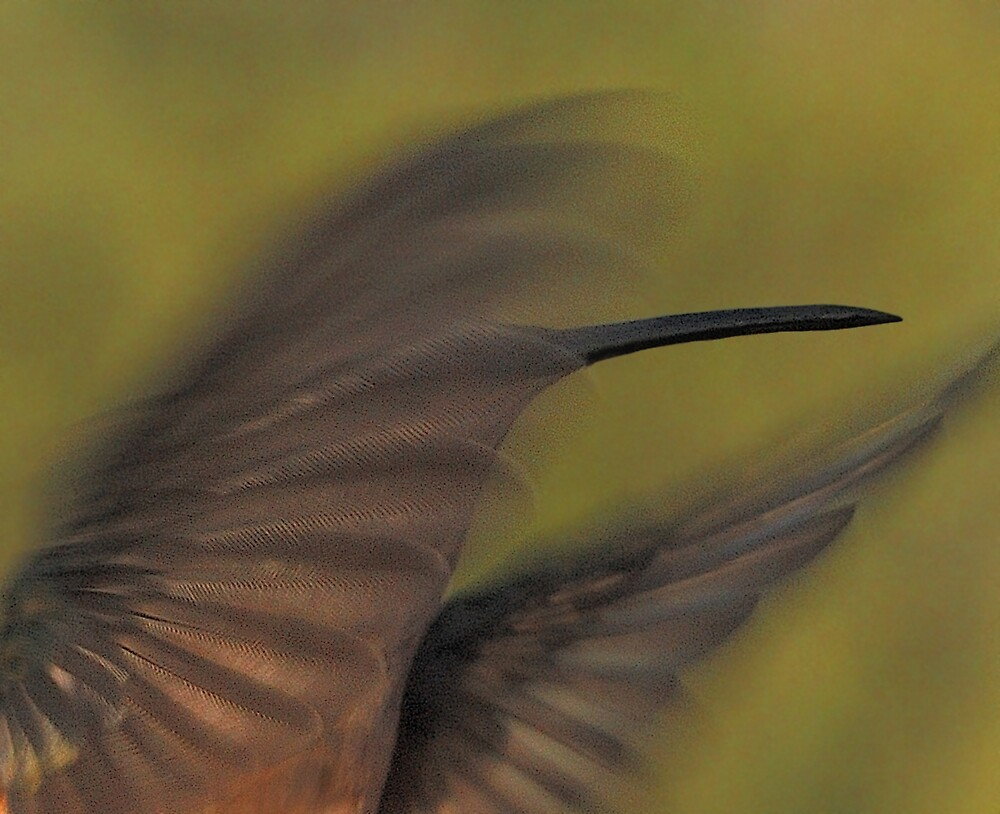 Wings by Ken  Aitchison